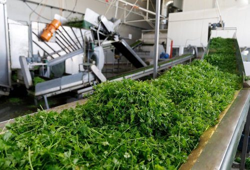 Parsley Processing